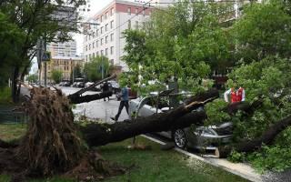Как водителю вести себя при урагане
